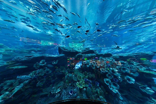 Dubai Mall Aquariam by salis-, on Flickr